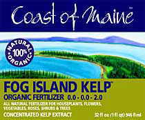 Fog Island Kelp (Coast of Maine)